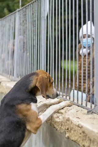 Une centaine de chiens vivent à Cheverny et sont visibles à tout moment de la journée au cours de votre visite.